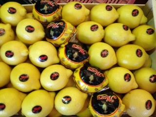 Limon Primafiori